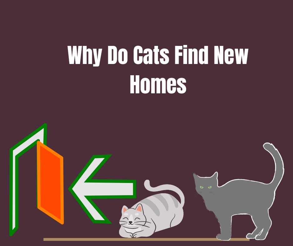 Why Do Cats Find New Homes