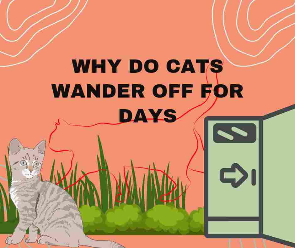 Why Do Cats Wander Off For Days