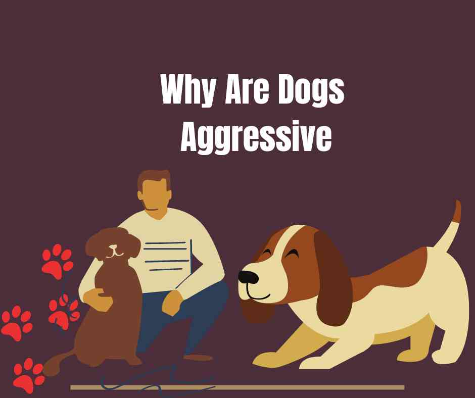 Why are dogs aggressive