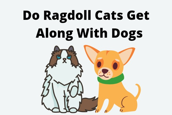 Do Ragdoll Cats Get Along With Dogs