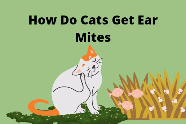 How Do Cats Get Ear Mites