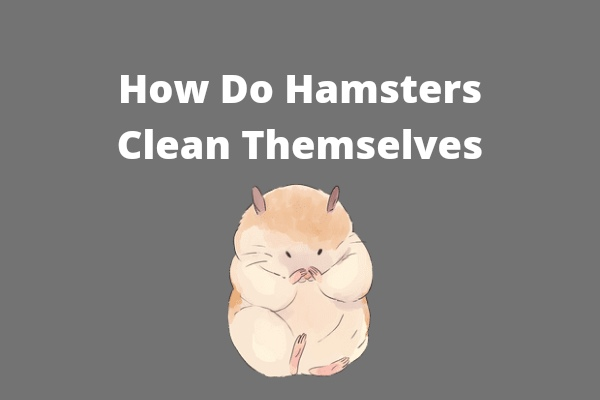 How Do Hamsters Clean Themselves