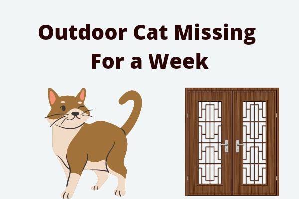 Outdoor Cat Missing For a Week