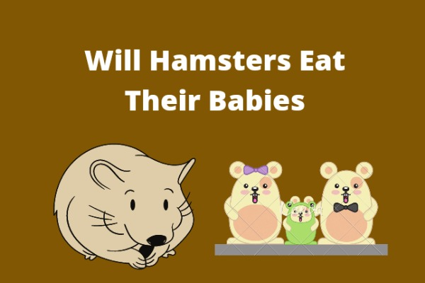 Will Hamsters Eat Their Babies