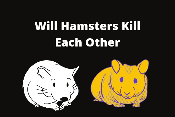 Will Hamsters Kill Each Other