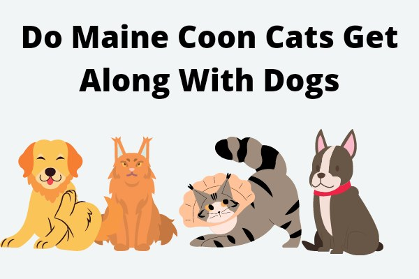 Do Maine Coon Cats Get Along With Dogs