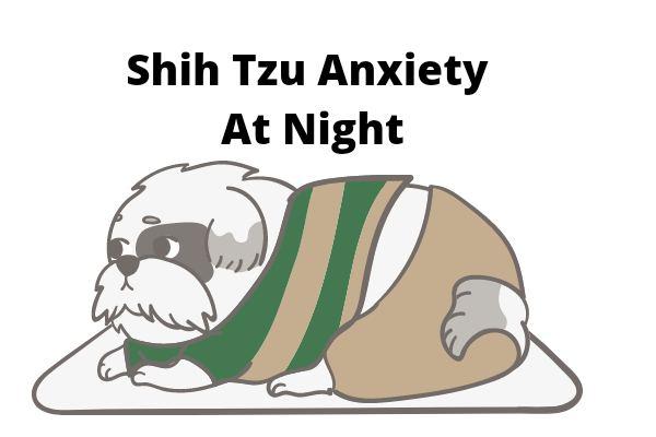 Shih Tzu anxiety at night