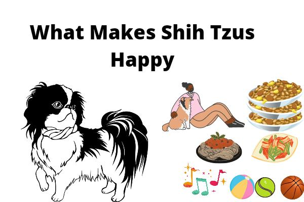 What Makes Shih Tzus Happy